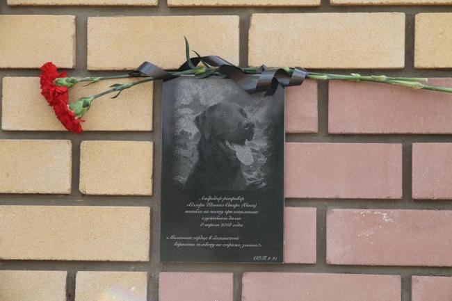 Памятную доску, посвященную лабрадору Соне установили в Костроме , фото-1