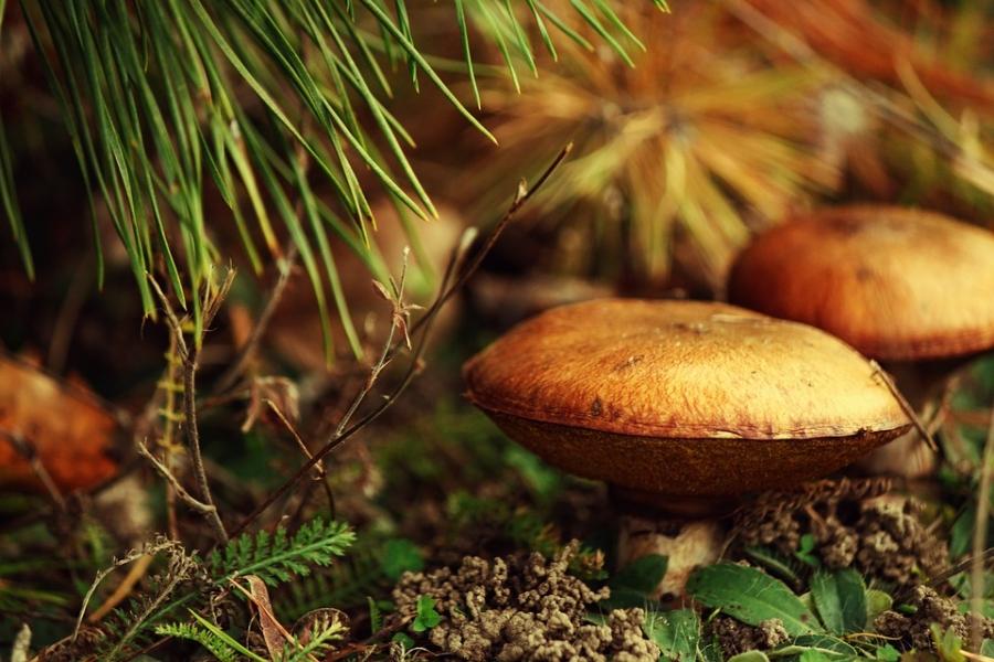 Вдень знаний лес не«отпустил» троих грибников