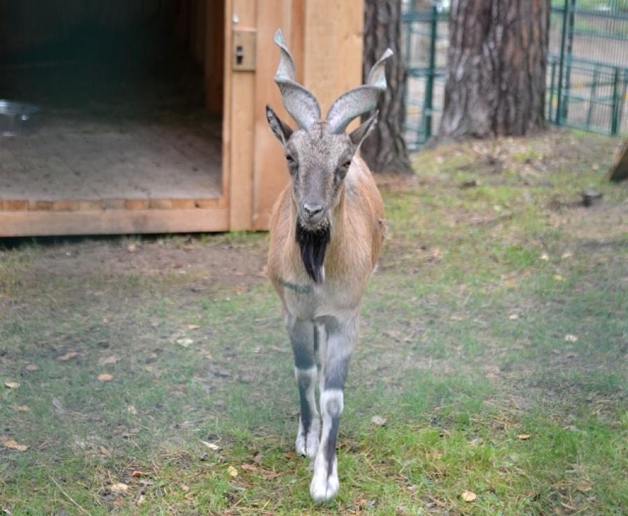 ВКостромском зоопарке— новые обитатели