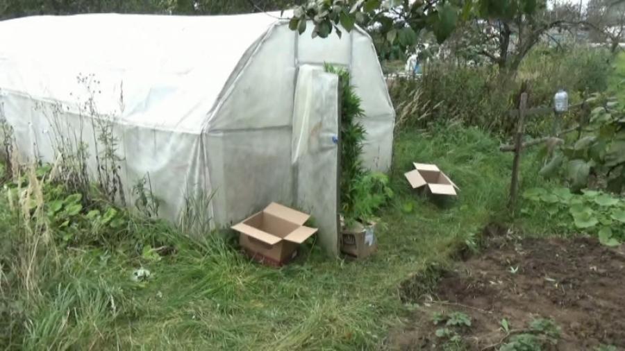 Полицейские вБурятии изъяли 135кг наркотиков