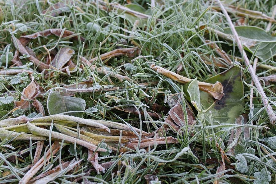 Ночные заморозки ожидаются в столицеРФ довыходных